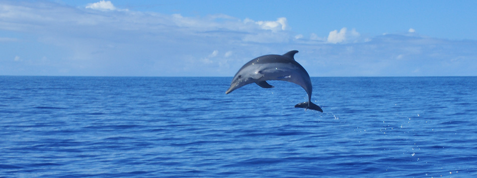swim with dolphin oahu