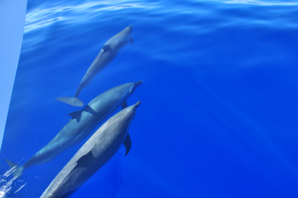swimming with dolphins oahu