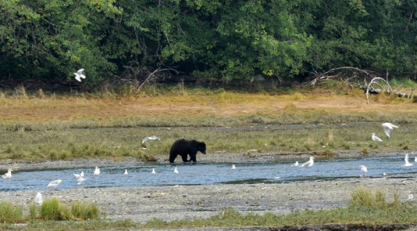 Bear watching juneau Alaska