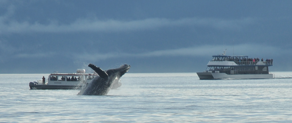 whale watching in juneau alaska