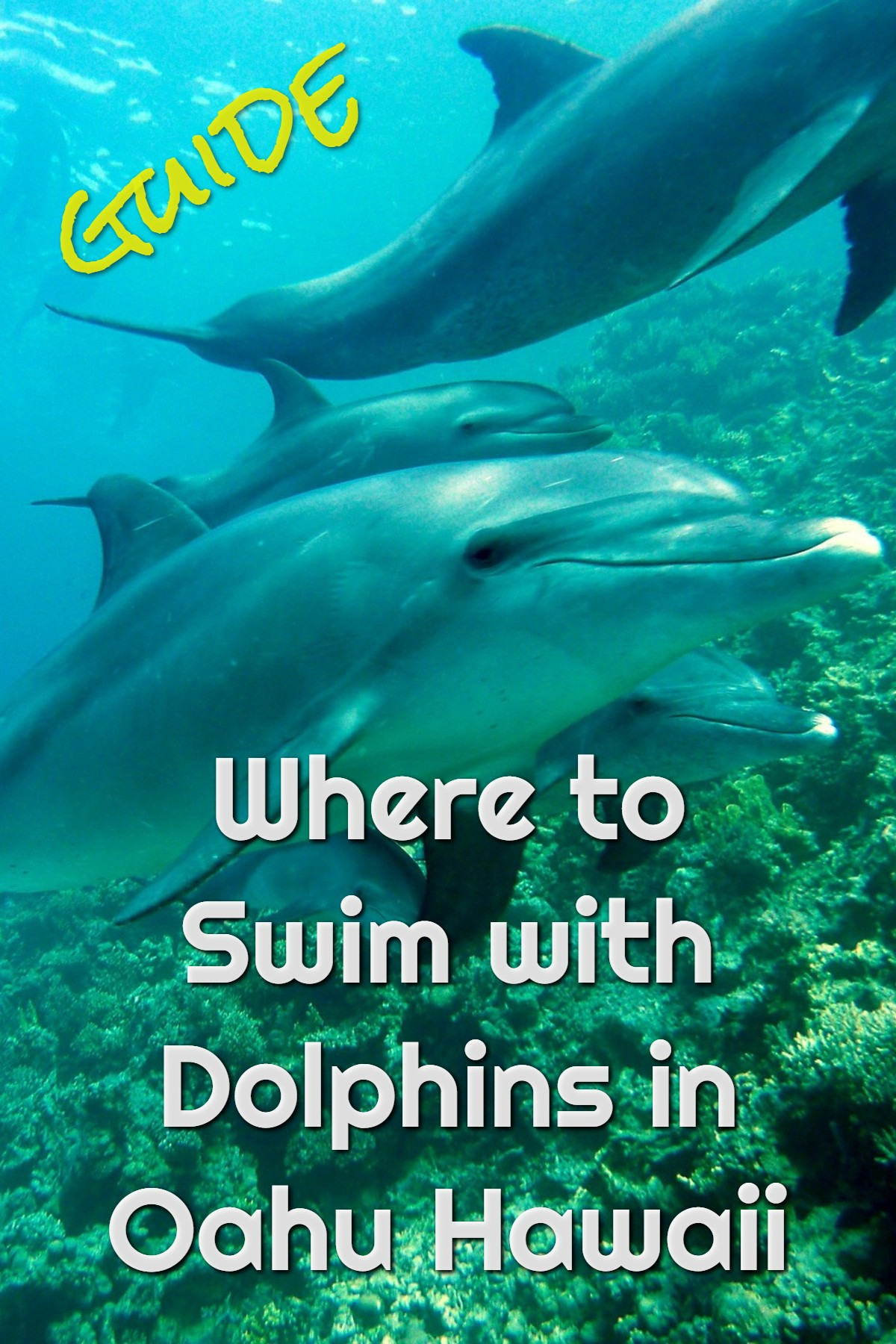swim with dolphins oahu